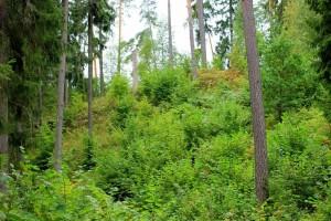 Bielkauciznos piliakalnis (2)